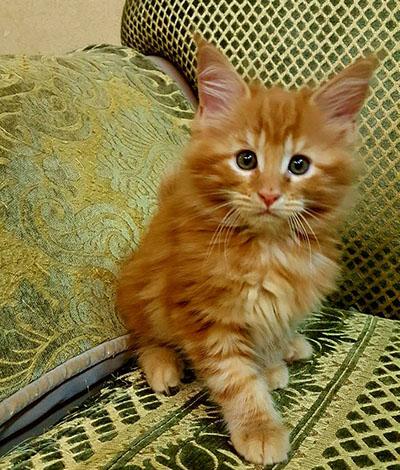 Котенок Saveliy